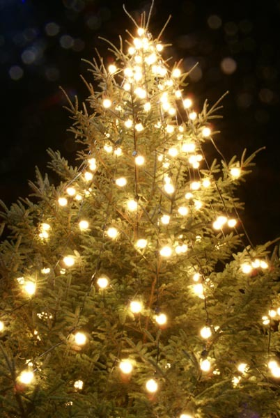 Outdoor-Christmas-Tree-Lights