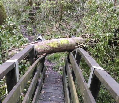 Tree damaged bridge